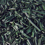 Spirulina the ultimate anti-oxidant