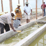 A Medicinal Spirulina Farm to boost immunity of patients in Kenya